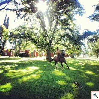 Horse Whisperer at La Bamba de Areco