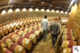 Catena Wine Cellar