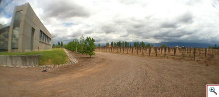 Vina Cobos' new vineyards